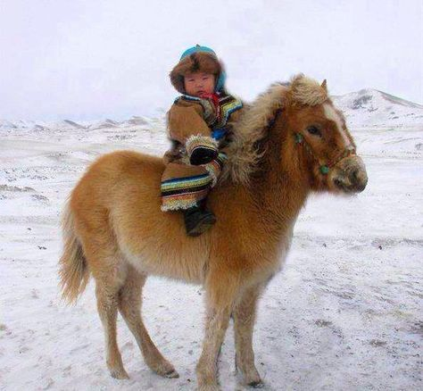 Mongolian child on horse. From the age of 3 the children of Mongolia learn to ride, mostly for races. The horses of Mongolia are smaller than a standard horse, but they are tough and fast. Beautiful Children, Beautiful Horses, Animals Beautiful, Mongolia, Baby Animals, Cute Animals, Jolie Photo, Horse Love, Horse Riding