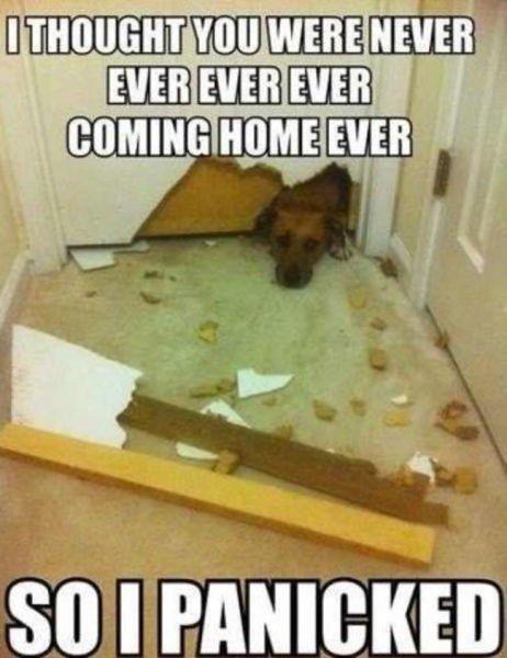 22 Dog Memes That Prove We Don T Deserve Those Adorable Little