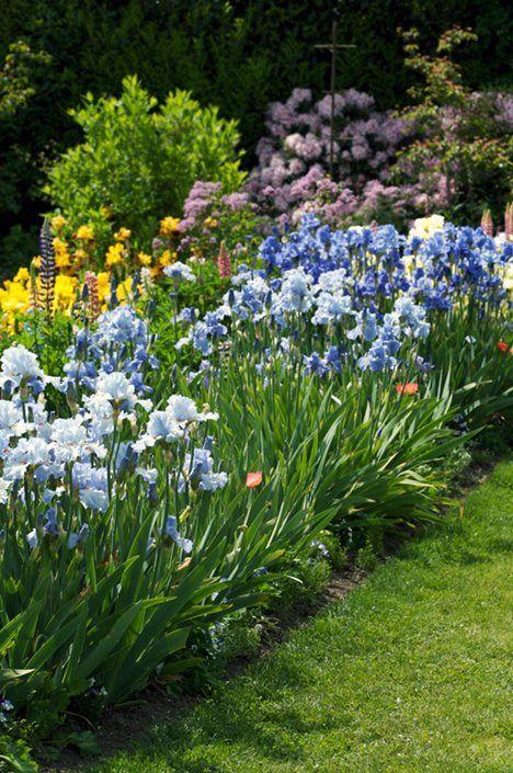 Irises For Easy Color In The Garden Iris Garden Iris Flowers Garden Growing Irises