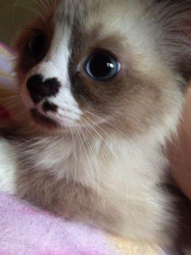 Weeeeeee Kittens Cutest Cute Animals Cats And Kittens