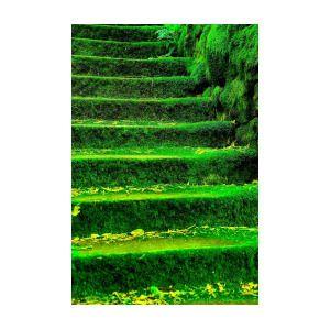Moss Carpet By Nik Catalina Catalina Nik Moss