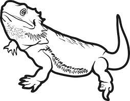 Image Result For Reptile Colouring Pages Dragon Coloring Page Bearded Dragon Tattoo Bearded Dragon Colors