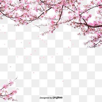 50 Lovely Cherry Blossom Wallpapers To Brighten Your Desktop Naldz Graphics Beautiful Landscape Wallpaper Cherry Blossom Wallpaper Blossom Trees