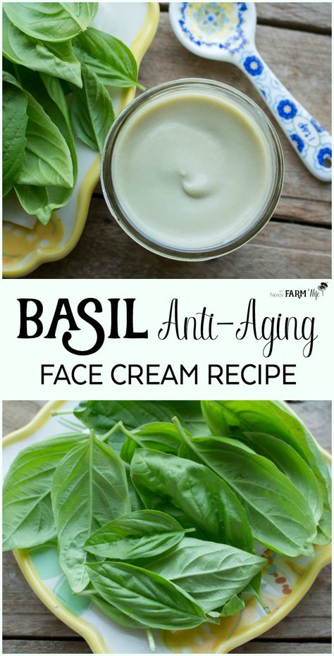 Basil Anti-Aging Face Cream Basil Anti-Aging Face Cream Recipe - This luscious DIY anti-aging face cream recipe contains fresh basil leaves, nourishing hempseed oil and skin softening mango (or shea) butter. Creme Anti Age, Anti Aging Cream, Anti Aging Tips, Best Anti Aging, Homemade Skin Care, Homemade Face Moisturizer, Facial Cleanser, Homemade Beauty, Belleza Natural