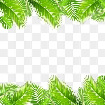 Leaf Green Tropical Border Jungle Leaves Background Nature Abstract Summer Illustration Beautiful Design Art D Leaf Clipart Frame Clipart Green Leaf Background