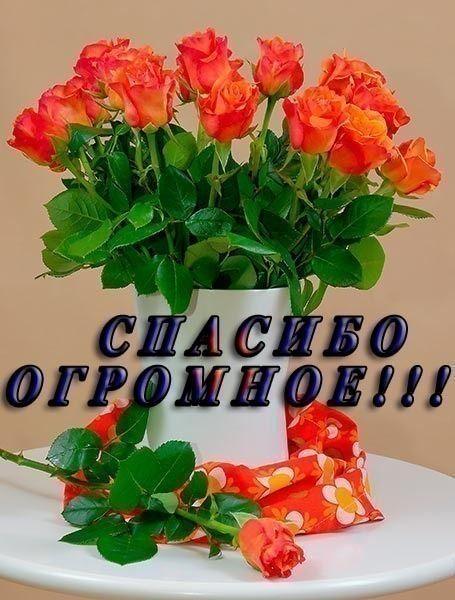 Krasivye Kartinki Spasibo Ogromnoe 37 Foto Cvety Na Rozhdenie