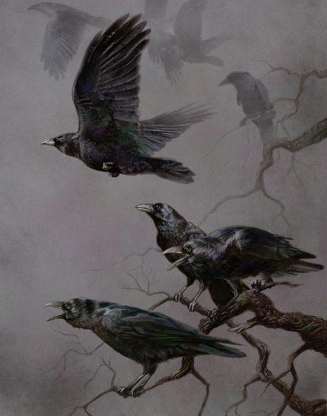 Raven, Crow, et Corbacs  0063d44d56db1fff89f76678b5835fb0--crows-ravens-beautiful-birds