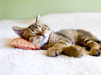 Schlafstorungen 9 Grunde Warum Du Schlecht Schlafst Katzen