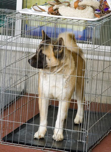 Tips To Make A Puppy Stop Crying When Left Alone Dog Cages