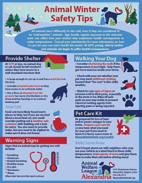 130 Pets Health Ideas In 2021 Pets Pet Health Pet Hacks
