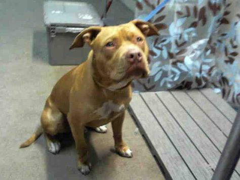 Orange County Animal Services Animal Id A277015 Room No Wdi07