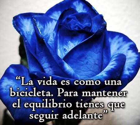 Imagenes De Rosas Azules Con Frases Rosas De Amor Rosas