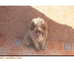 Perros Machos Perdidos Espana Malaga Perros De Agua