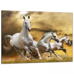 C2243 تابلوه مودرن تابلوه مودرن تابلوهات مودرن تابلوهات براويز مودرن صور براويز تابلوهات خشب تابلوهات مودرن Horse Wallpaper White Horses Horse Posters