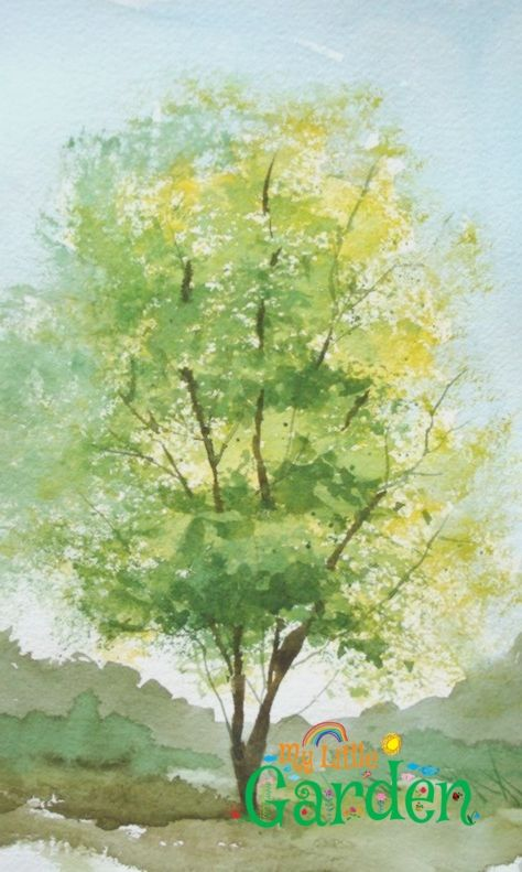 Pinterest Aquarell Baume Suche Mit Google Watercolor Trees