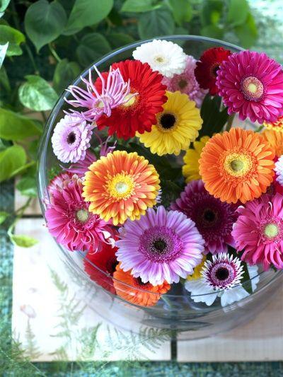 Une vue de haut d'un bouquet de Gerbera
