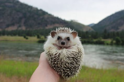 The adventures of the hipster hedgehog.