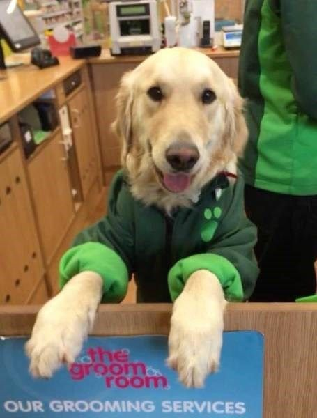 Reporting For Duty Pups Hard At Work At Their Very Important Jobs Dog Words Pup Pets