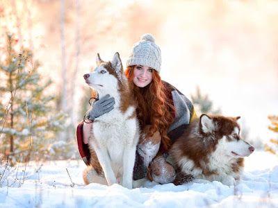 Best Siberian Husky Wallpaper Hd Husky Snow Dogs Siberian Husky