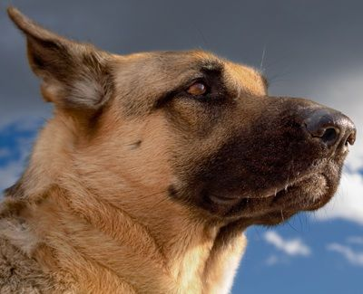 30 Best Its In The Air For Dogs Images Dogs Detection Dogs Cancer