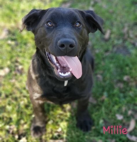 Adopt Millie On Petfinder Dog Adoption Help Homeless Pets Pet Adoption