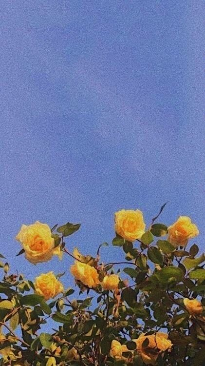 List Of Hellow Aesthetic Tumblr Wallpaper Iphone Pictures