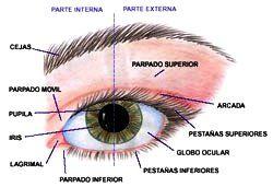 Ojo Humano Anatomia Del Ojo Dibujos De Ojos Ojo Humano
