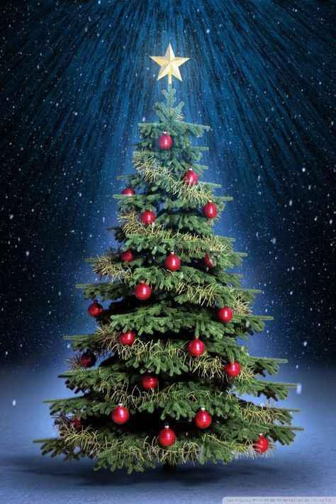 60 Beautiful Christmas Iphone Wallpapers Free To Download Christmas Tree Wallpaper Christmas Live Wallpaper Christmas Tree Gif Beautiful free christmas wallpaper for