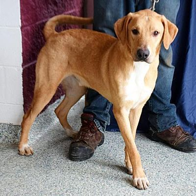 Huntley Il Great Dane Meet Snickers A Pet For Adoption