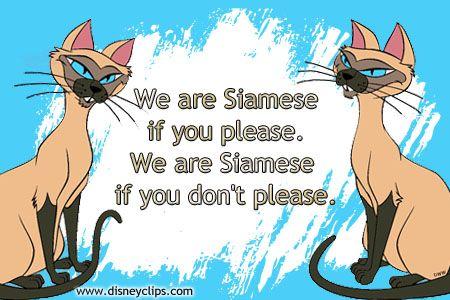 The Siamese Cat Song Ladyandthetramp Disney Movie Quotes Disney Songs Disney Quotes