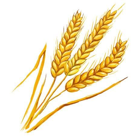 Image Title Wheat Drawing Corn Drawing Wheat Vector