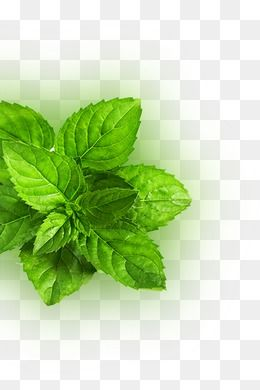 Fresh Mint Leaves Mint Green Leaves Png Transparent Clipart Image And Psd File For Free Download Mint Leaves Fresh Mint Leaves Fresh Mint