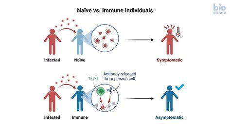 كورونا وأكذوبة مناعة القطيع T Cell Naive Blog Posts