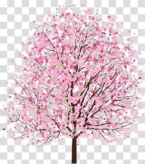 Cherry Blossom Tree Cherry Blossom Transparent Background Png Clipart Cherry Blossom Watercolor Cherry Blossom Drawing Cherry Blossom Tree