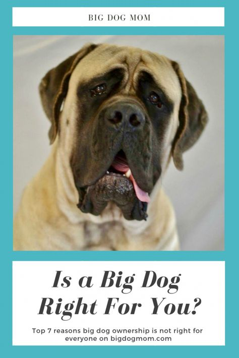 Large Breed Dogs Are Not Right For Everyone Are You A Good Fit