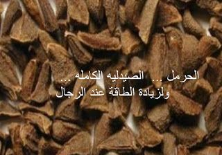 البيت العربي الحرمل الصيدليه الكامله ولزيادة الطاقة عن Food Desserts Beef
