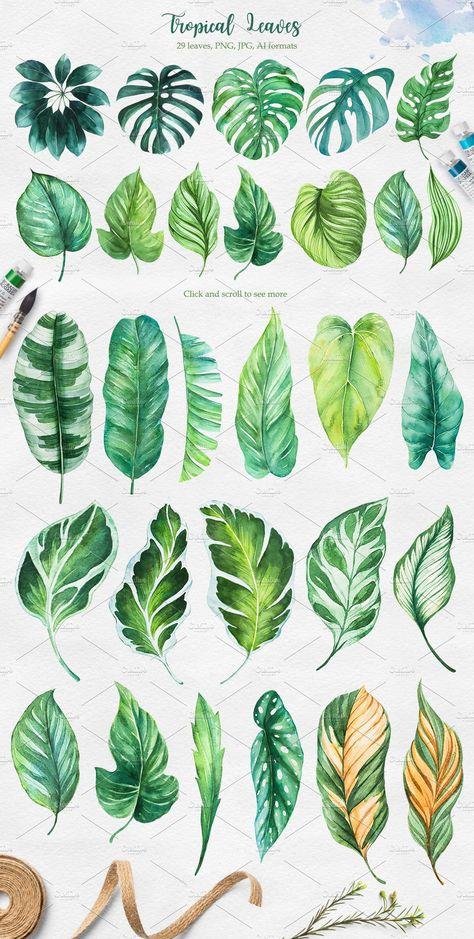 Tropical. Watercolor illustrations. by AlexGreenArt on @creativemarket