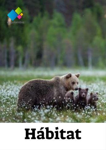 Habitat Nicho Ecologico Donde Viven Los Osos Animales