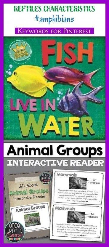 Reptiles Characteristics Amphibians Seo Blog Niches Animals Reptiles Presc Pet Care Is Both Enjoyable Busi Reptiles Y Anfibios Anfibios Kindergarten