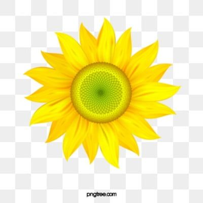 Golden Sunflowers Sunflower Clipart Sunflower Png Watercolor