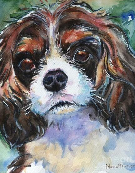 Maria Reichert Watercolor King Charles Spaniel Spaniel Art Dog Paintings Watercolor Dog