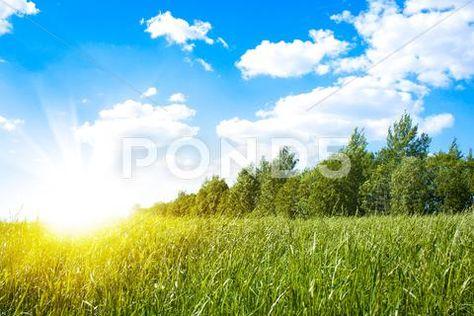 Sunset sun and field of green fresh grass ~ Hi Res #51187468