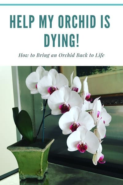 How To Keep Orchids Alive And Looking Gorgeous Orchids Orchid Roots Orchid Flower