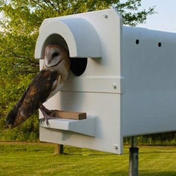 If youre looking for a natural approach to rodent control, enlist a barn owl—or two—to help eliminate mice, voles, and gophers from your property. Would love to have a backyard barn owl! Owl Nest Box, Owl Box, Nesting Boxes, Tier Fotos, Hobby Farms, Owl House, Small Farm, Rodents, Nocturne