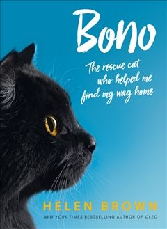 Bono The Rescue Cat Who Helped Me Find My Way Home Cat Rescue Cats Bono