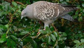 List Of Pinterest Burung Gambar Merpati Images Burung Gambar