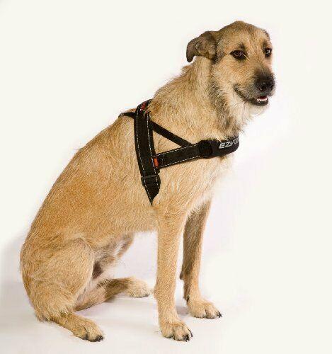 Ebay Sponsored Ezydog Quick Fit Hu M Schwarz Dog Harness Dog