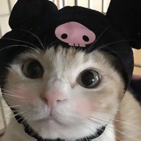 I Love Cats, Cute Cats, Hello Kitty My Melody, Hello Kitty Cat, Cat Aesthetic, Cute Little Animals, Cute Memes, Cute Babies, Kittens
