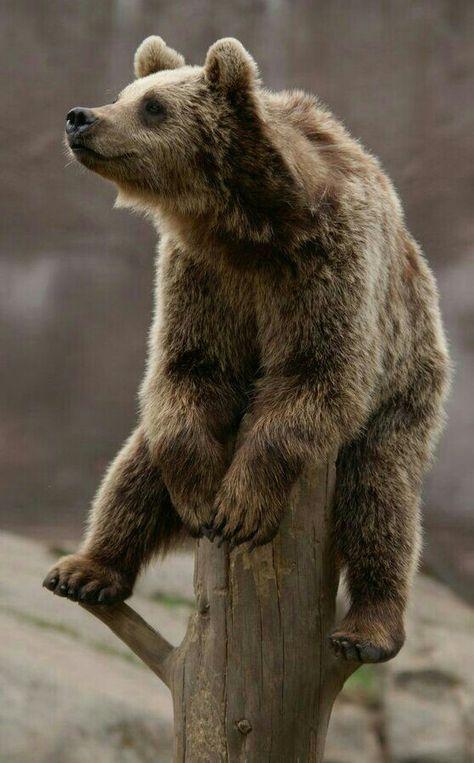 Картинка прикольный медведь, открытка