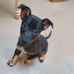 Pet Card Pet Adoption Dog Adoption Pets